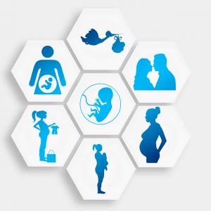 コウノトリ、胎児、夫婦、妊娠などをイメージさせる7つのイラスト