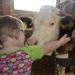 牛に手を差し出す眼鏡をかけた女の子の後ろ姿