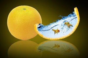 1個丸々のオレンジと、一欠片のオレンジ。一欠片のオレンジには2匹の金魚が泳ぐ